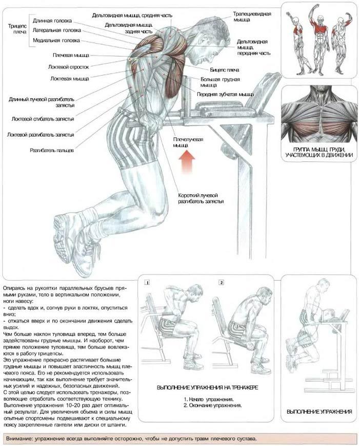Прокачка грудных мышц в домашних условиях программа